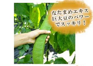 natamamekakishibu.jpg